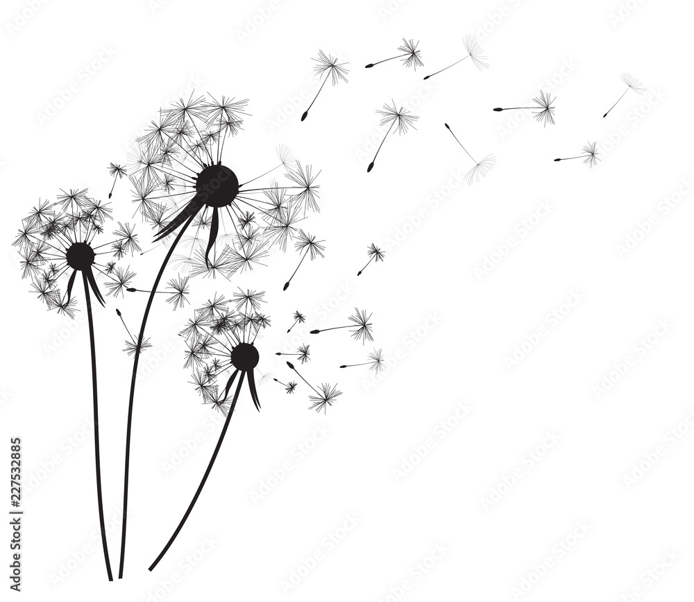 Fototapety, obrazy: Abstract dandelion background  vector illustration