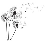Fototapeta Puff-ball - Abstract dandelion background  vector illustration