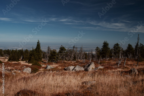 In de dag Afrika Mountain view landscape with rocks and pine tree on a bright blue sky late summer day. Brocken, nature reserve Harz mountains, National Park Harz in Saxony-Anhalt, Germany