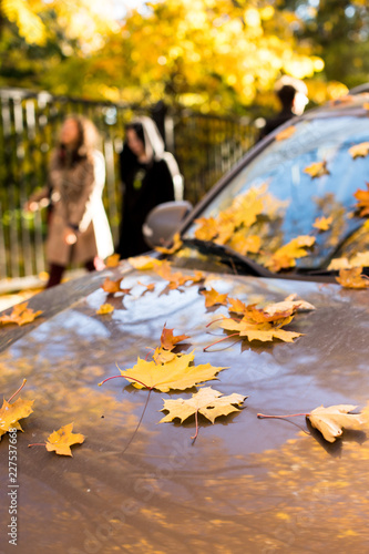 Fallen yellow maple leaves lying on car windshield and hood in sunny weather, couple on blurred background, soft focus. Autumn foliage, transport, season concept.