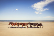 Horses Walking At Beach Against Sky