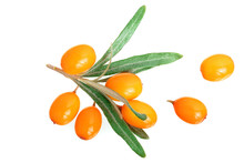 Sea Buckthorn. Fresh Ripe Berry With Leaves Isolated On White Background. Top View. Flat Lay Pattern