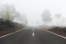 Road With Trees On A Side Disappearing Into The Fog