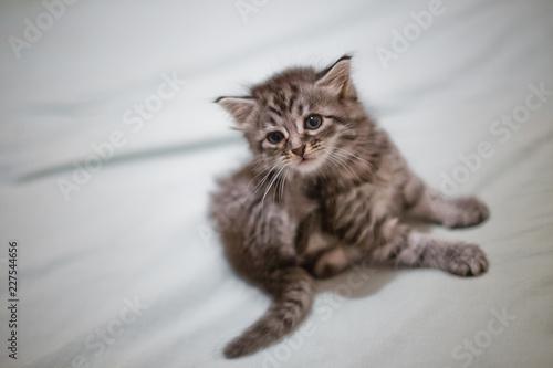 Foto  Flea cat on the bed