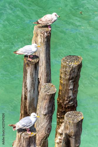 Fotografía  Buhnen an der Küste von Saint-Malo