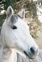 White Horse's Head