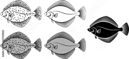 Photographie flounder