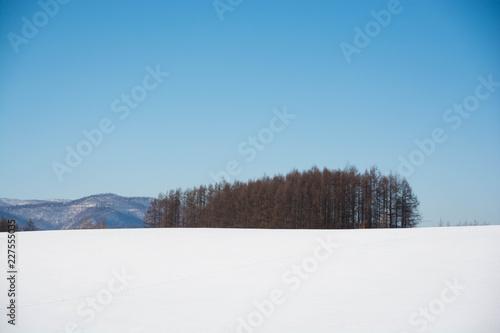 Foto op Aluminium Blauw 冬の青空と雪原と落葉松林 美瑛町