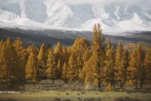 Landscapes Of Russia - Altai Ranges