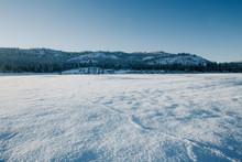 Little Mouse Tracks Across A Snowy Field.