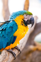 Closeup Of A Blue And Yellow M...