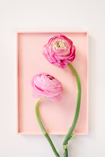 Two Ranunculus Blooms On A Pin...