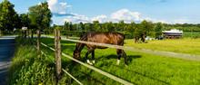 Pferde An Der Wiese Am Kanal In Senden In Münsterland