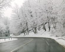 Asphalt Road In Winter Forest