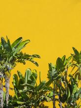Palms On Yellow