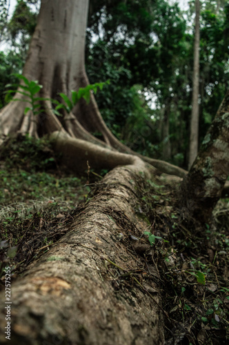 Photo Stands Asia Country roots of a large tree