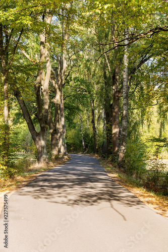 Foto op Canvas Weg in bos Curved rural road between the trees in the forest