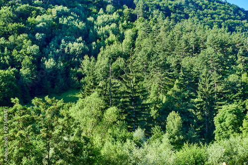 Fotobehang Olijf Pine forest