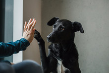 Black Rescue Dog With Saddest Eyes Gives Her Owner High Five