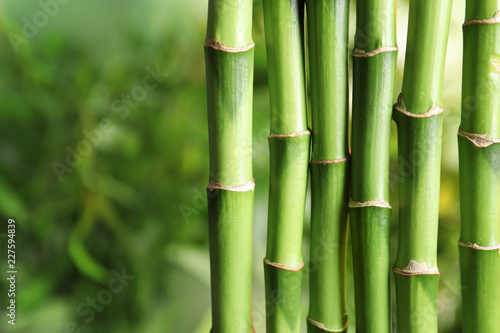 Foto op Plexiglas Bamboe Green bamboo stems on blurred background with space for text