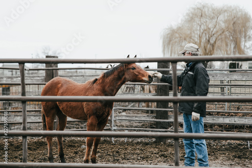 man reaching out to young colt during training
