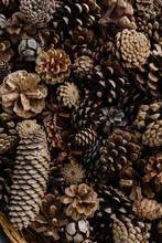 Pine Cones Background