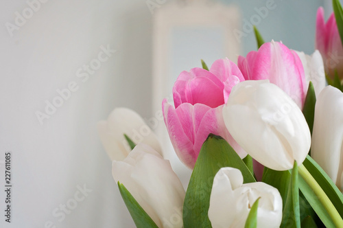 Fototapeta  A closeup of white and pink tulips were used as a Spring interior decoration