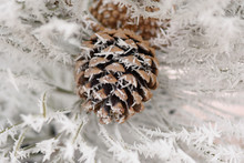 Hoar Frost On Cone And Needles Of A Tree
