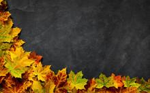 Autumn Leaves On Dark Slate Ba...