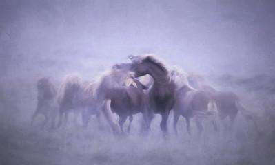 Fototapeta Icelandic horse playing, artistic merge