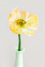 Yellow Poppy In A Green Milk Glass Vase
