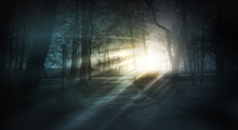 Dark Forest, Rays Of Sunlight Through The Trees, A Magical Forest