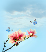 Beautiful Butterfly On Pink Flower Magnolia, Sky Background