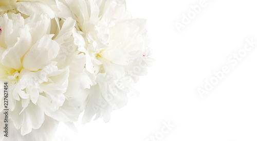 La pose en embrasure Hortensia White flowers peonies isolated