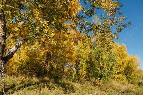 Foto op Canvas Herfst Colorful autumn forest on september sunny day