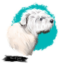 Glen Of Imaal Terrier Dog Bree...