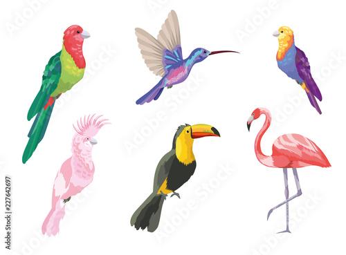 set tropical birds exotic nature Wallpaper Mural