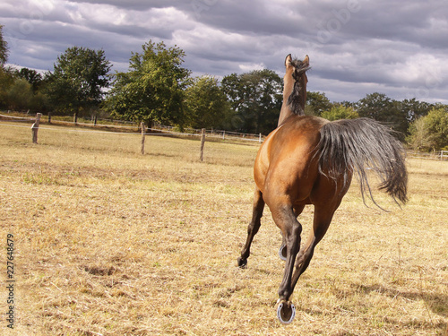 Fotografía  backside of running brown horse with dark clouds