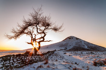 Lone Tree - Winter - Roseberry...
