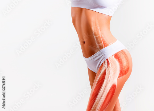 Fotografie, Obraz Woman's gluteus muscle and body structure