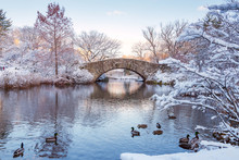 Central Park. New York. USA In...