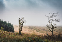 Thick Mist Covering The Hills