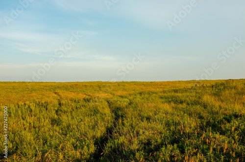 Canvas Prints Honey Plains Horizon