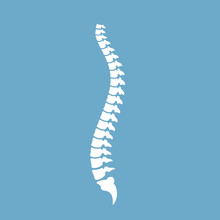 Strong Healthy Spinal Cord Vec...