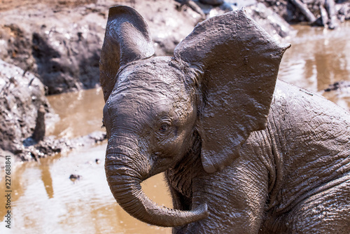 Baby Elephant's Mud Bath Wallpaper Mural