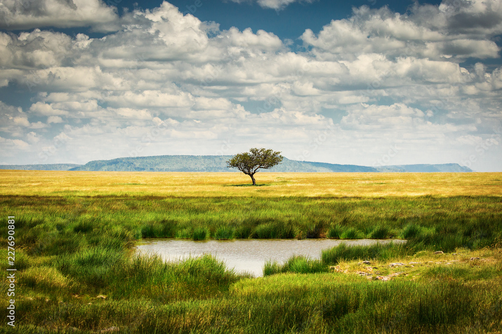 Fototapeta Single tree near to a lake and lot of grass aroud and beautiful clouds in background in National Park of Serengeti Tanzania