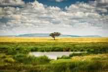 Single Tree Near To A Lake And...