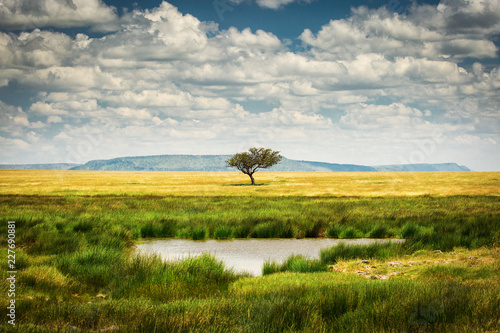 Single tree near to a lake and lot of grass aroud and beautiful clouds in background in National Park of Serengeti Tanzania © danmir12
