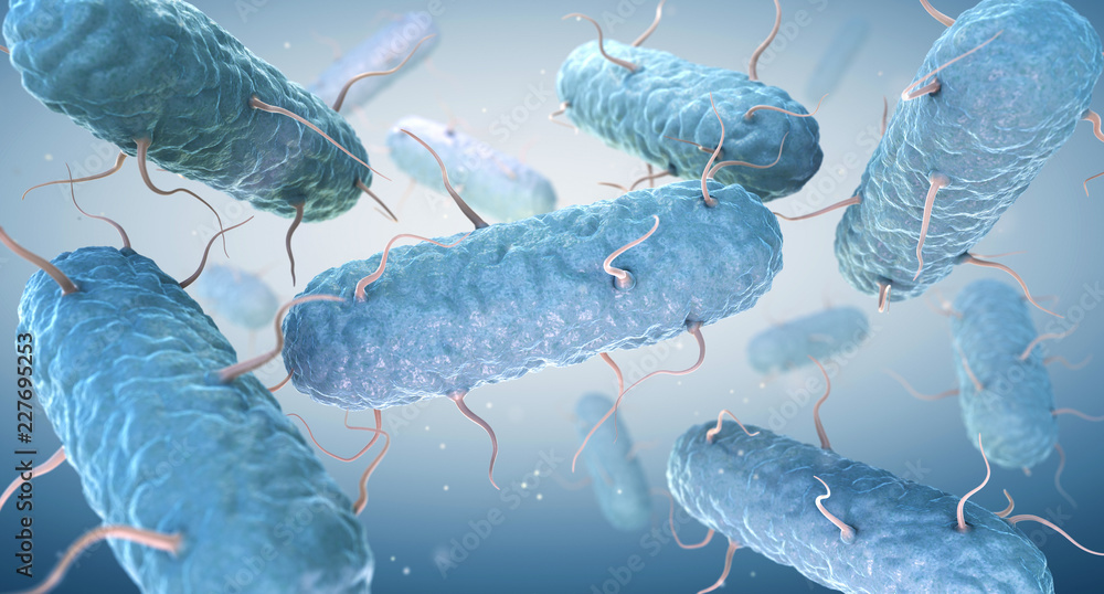 Fototapety, obrazy: Enterobacteria. Enterobacteriaceae are a large family of Gram-negative bacteria