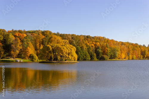 Foto op Canvas Herfst Landscape from the autumn forest and pond